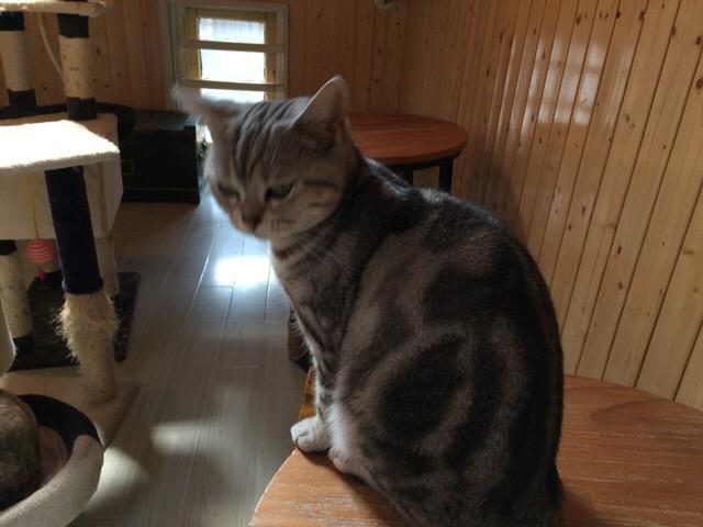 上海での猫分欠乏性自律神経失調症の治療